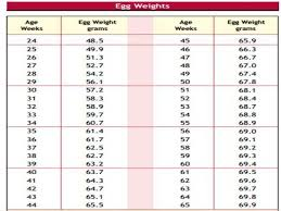 Daily Feed Intake Guide For Broilers Chicken