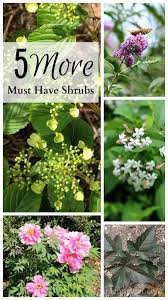 Small Picture 465 best Shrubs and bushes images on Pinterest Flower gardening