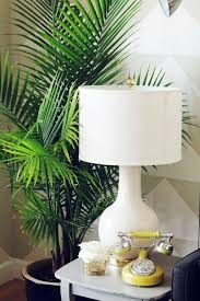 plants for living room. feng shui plants for harmony and positive energy in the living room