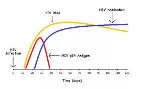 What Is The Maximum Hiv Window Period Quora