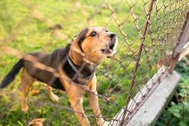 Image result for dog proof fencing