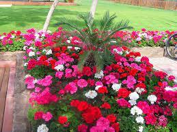 Почистването на цветната градина, отрязването на цъфтящи съцветия и маломерни растения няма да отнеме много време. Cvetna Gradina Antaliya Facebook