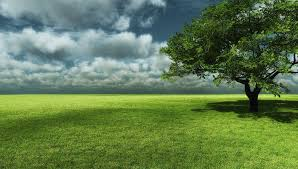 grass field background with flowers. Big Tree With Grass Field Landscape Wallpaper Background Flowers N