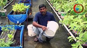grow your own food ii conner gardening ideas క ట య నర గ ర డ న గ చ యడ ఎల