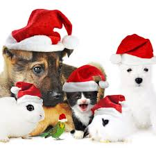   see more about christmas, winter and phone wallpaper. Christmas Puppies Wallpaper Page 1 Line 17qq Com