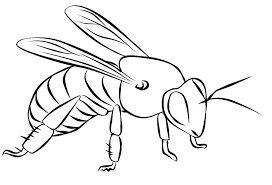 Small Picture Bee coloring pages to print ColoringStar