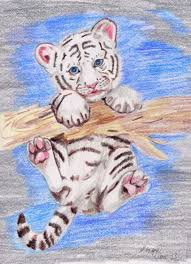 white tiger cubs drawing. Perfect Drawing Tiger Cubs Drawing Siberian Tiger White Tigers Google Search  Baby Cub To Cubs Drawing