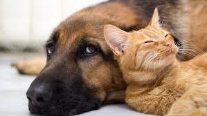 Psy i koty to naturalne antydepresanty dla ludzi - Kobieta
