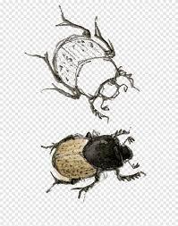 Beetle Fauna Pollinator แมลงปีกแข็งด้วง, สัตว์, arthropod png