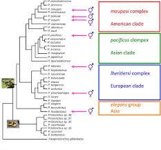 Pristionchus Biology Taxonomy And Phylogeny