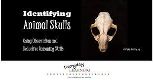 Small Animal Skull Identification Chart Discover This Skull Identification
