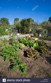 ocean view farms community garden west los angeles california usa stock image