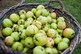 Billedresultat  for kurve med æbler