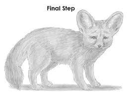 fennec fox drawing. Brilliant Fox Draw Fennec Fox Throughout Drawing R