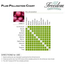 Plum Pollination Chart Apple Tree Plum Fruit Trees