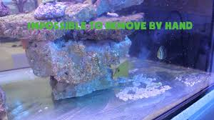 polishing starfire glass on 250g reef tank from miracles aquariums
