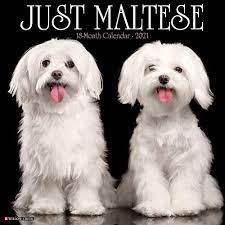 best gifts for maltese dog