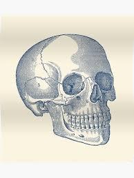 Human Skull Diagram Vintage Anatomy Poster