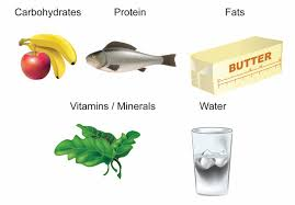 Protein Vitamins Minerals Fats And Carbohydrates Chart Year 8 Science Biology Healthy Lifestyles