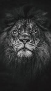 Black Lion Wallpapers Hd Resolution Hupages Download
