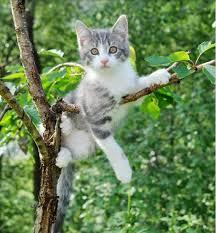 Manfaat Memelihara Kucing Bagi Lingkungan
