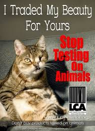 best animal rights petitions stop animal cruelty petitions stop animal testing ughhh i only buy cruelty beauty products how can anyone not care enough to stop