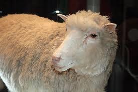 Долли (овца) — Википедия