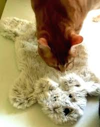 cat puzzle rug small size of toy toys teddy bear play playing rugby kitty grey tabby
