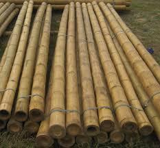 bamboo garden stakes. #%Bamboo Poles/Solid Bamboo Poles Tre Gai/bamboo Split/bamboo Halves(half-round) - Heavy Duty And Weigh For Wedding Arbors, Tiki Bars, Hut, Garden Stakes A
