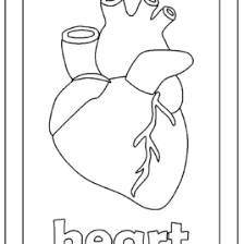Small Picture Body Coloring Page Cheap Body Coloring Pages For With Body