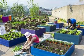 Small Picture Urban Rooftop Garden Designs Changing City Architecture with Green