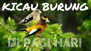 Web download lagu dari youtube ke mp3. Download Suara Alam Pagi Hari Mp4 3gp Naijagreenmovies Netnaija Fzmovies