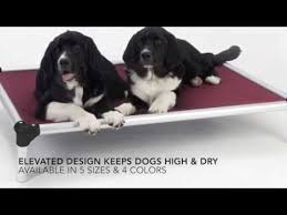 what are the best outdoor dog beds