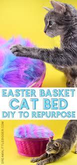 easter basket cat bed
