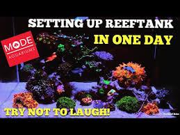 <b>Angel Fish</b> Reef Safe? - YouTube