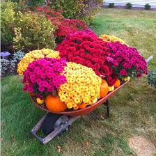 A Fall Gardening Guide How To Grow ColdWeather Vegetables Fall Gardening
