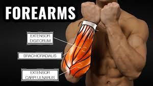 forearm size the best science based forearm workout for size and strength youtube