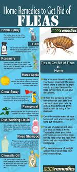 home remes to get rid of fleas