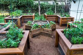 terrace vegetable garden landscape traditional with redwood raised beds san francisco environmental restoration services