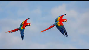 birds flying. Contemporary Flying 21 Colorful Birds Flying In The Air Intended