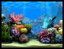 fish tank lighting ideas. Fish Tank Ideas   Empty Choose Any Amount Of Creatures From The Image On . Lighting N