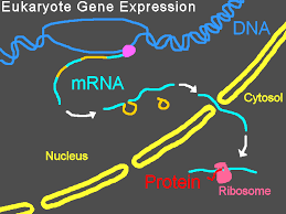 Image result for gene expression