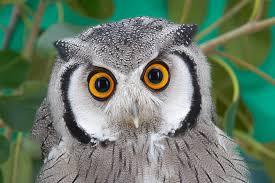 owl san go zoo animals plants