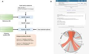 Flowchart And Outputs Of Synsearcher A Given A Dna Or