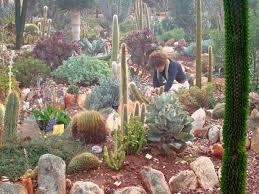 Small Picture Succulent Plants in Gauteng Soekershof the scientific backup
