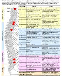 Spinal Nerve Chart