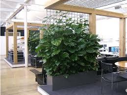 office indoor plants. coporate open plan melbourne office indoor plants