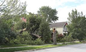 What to Do If A Tree Damages Your Roof | Angie\u0027s List
