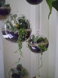 terrarium globe i think i actually have several of these glass globes all i need to do is the plants and create creative projects
