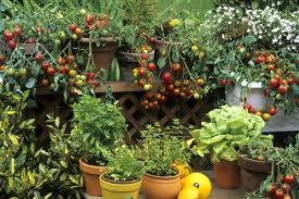 big gardening ideas for small spaces
